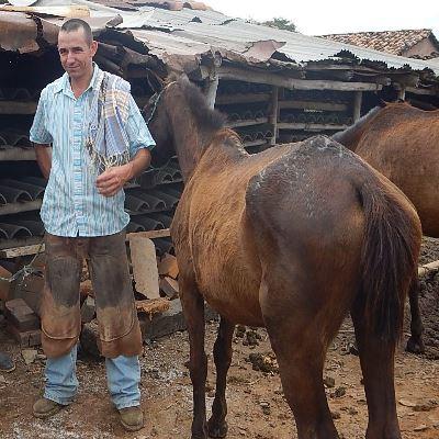 mißbrauchte Pferde