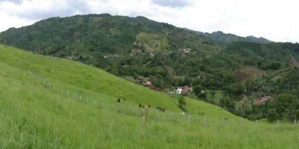aldea colibri simbiosis