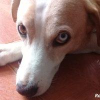Hilfe für Kolumbiens Strassenhunde und -katzen